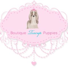 Boutique Teacup Puppies Custom Logo